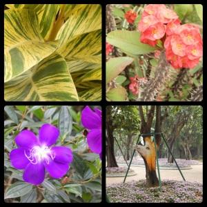 7-collage-flora